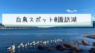 suwako-swan